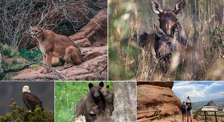 Trip to The Treasure of American Wildlife – Colorado